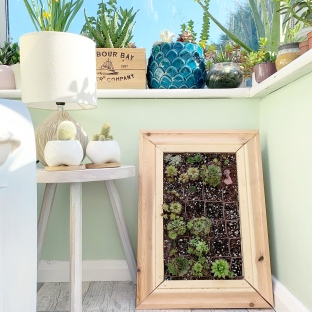 succulent picture frame