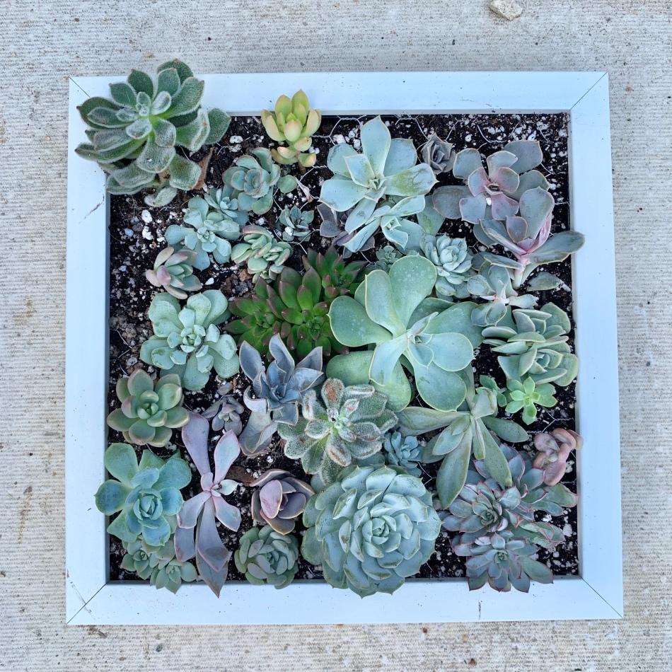 diy succulent frame
