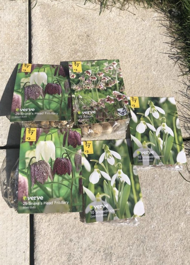 spring bulbs for shade burgundy