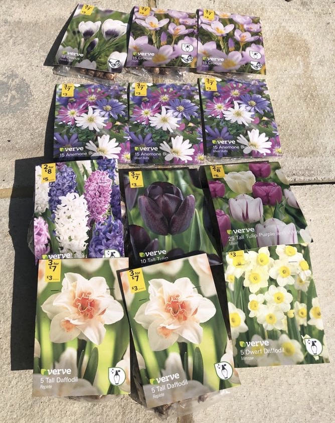 spring bulbs purples