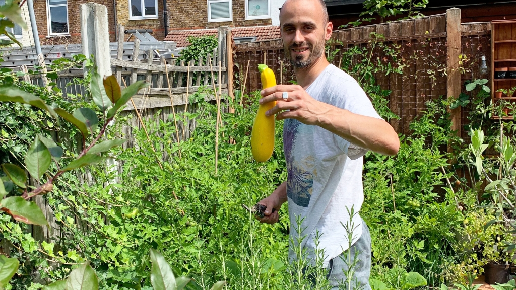 homegrown yellow courgette