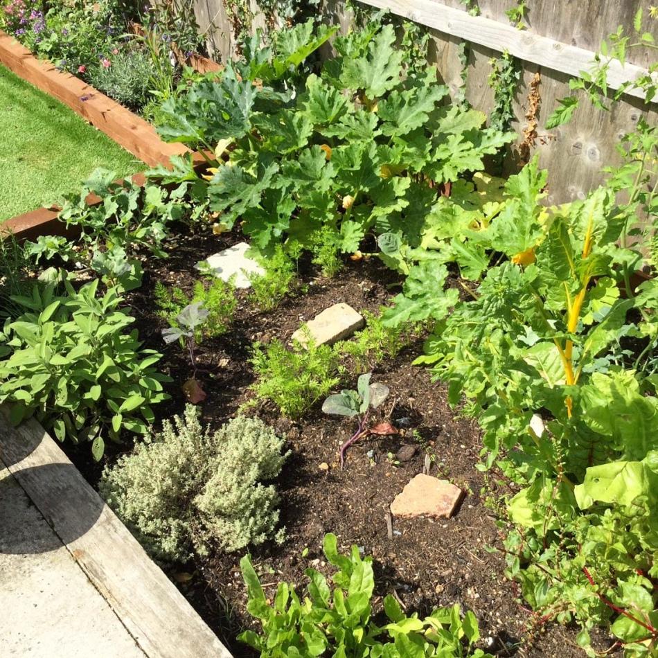homegrown veg patch
