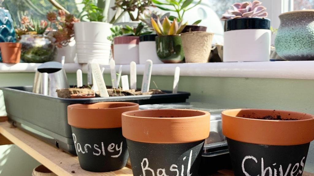 blackboard herb pots