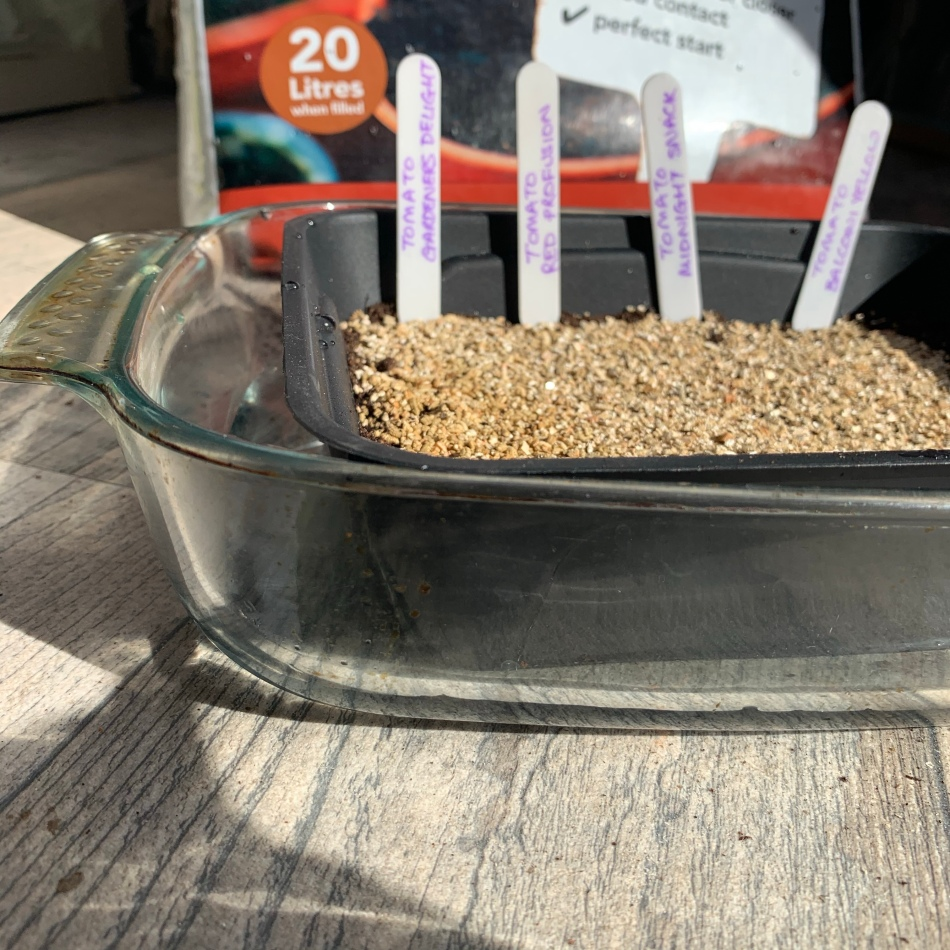 Watering seed tray
