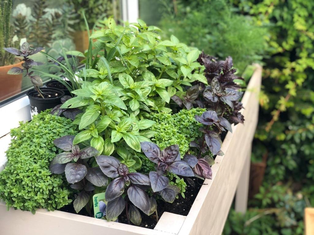 mixed basil plants