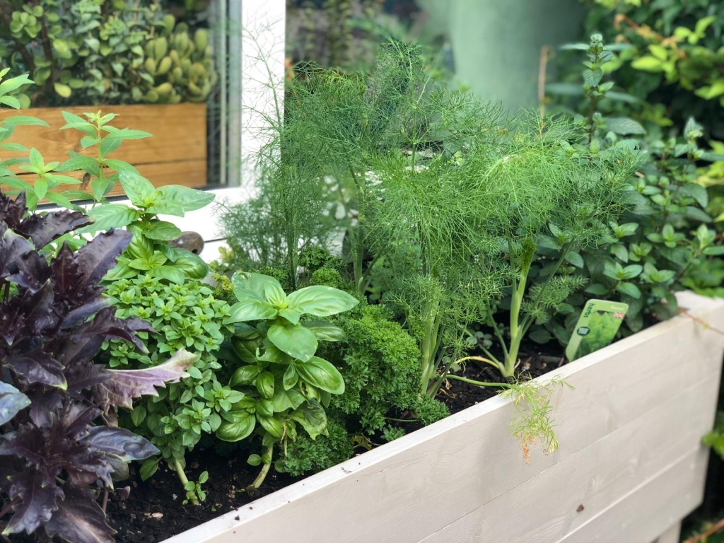 parley fennel mint and basil in herb planter